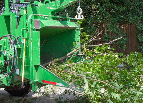 Tree service industrial chipper mulching branches.