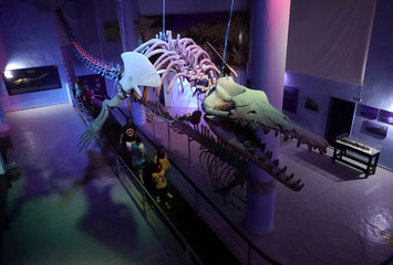 """The Basilosaurus Whale skeleton is seen at the center of Hurghada Grand Aquarium """"Red Sea in Glass"""" in Hurghada"""