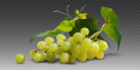 Fototapeta A branch of yellow ripe grapes with leaves on a gray checkered background.  3D vector. High detailed realistic illustration. obraz