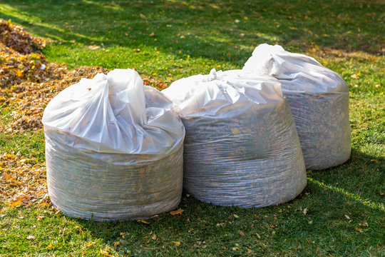 Pile of yellow and orange fallen leaves collected in big white plastic bags on green grass lawn at backyard. Autumn or spring foliage removal in city street or park. Natural waste cleaning disposal