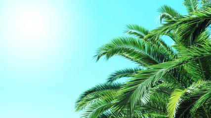 Palm tree blue sky with sun background