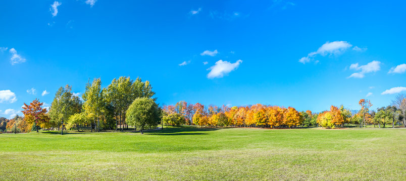 panoramic picturesque park landscape with bright autumnal trees and blue sky