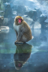 Photo sur Plexiglas Singe Japanese Macaque in hot spring in Jigokudani Monkey Park, Japan