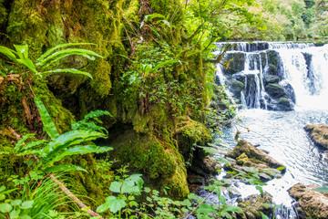 Tropische Wildnis im Jura der Franche Comté