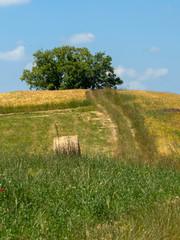 Passo del Penice: mountain landscape