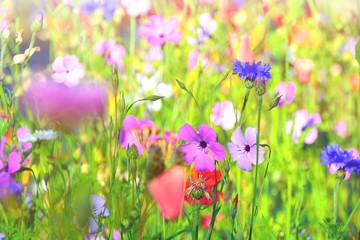 Wall Mural - bunter Blumenwiese - Wildblumen im Sommer