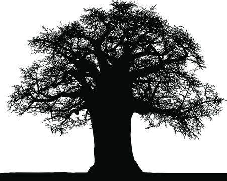 Black silhouette of a baobab in vector on a white background.