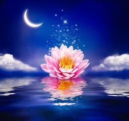 Beautiful magic flower on water. Waterlily or lotus and moon in night.
