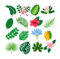 Tropical flowers and leaves collection vector isolated
