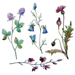 Wildflowers floral botanical flowers. Watercolor background illustration set. Isolated flowers illustration element.