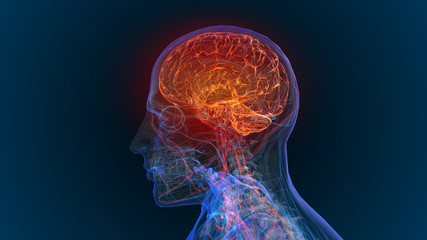 3d rendered illustration of  brain tumor and brain disease 3D illustration