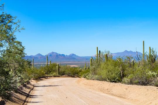 Desert Overlook in Saguaro National Park