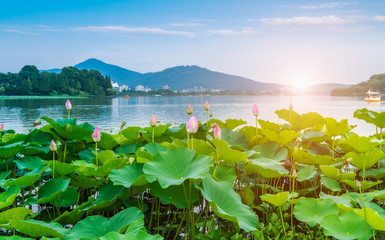 Foto auf Acrylglas Grun Lake Lotus Pond and Landscape Scenery..