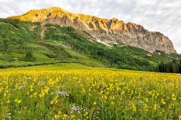 Gothci Mountain Morning Sunflowers