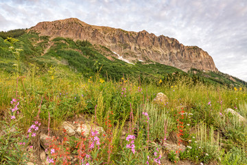 Scarlet Gilias and Gothic Mountain Morning
