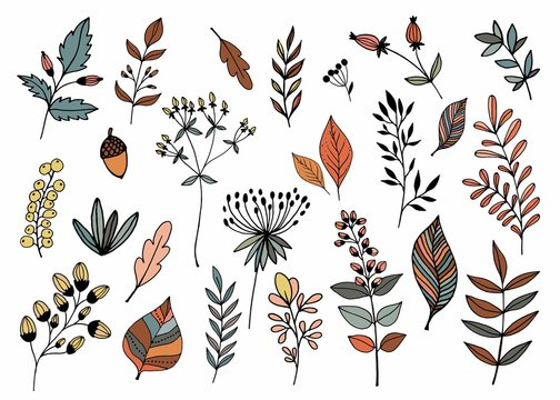 Hand drawn collection with different seasonal plants, isolated, vector design