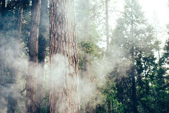 Fire smoke in sequoia redwood forest in Yosemite, California