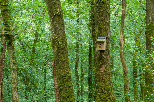 Artificial nest box in the Lydford Gorge Reserve
