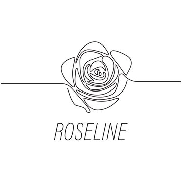 Rose line graphic design template illustration isolated