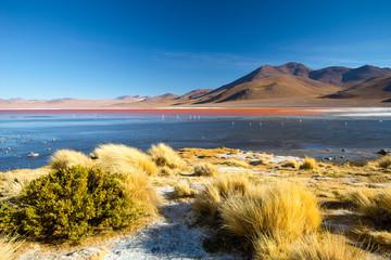 Laguna Colorada - red water lagoon. Bolivia. South America