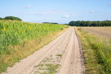 Scenic farm road near Guetersloh in Westphalia, Germany
