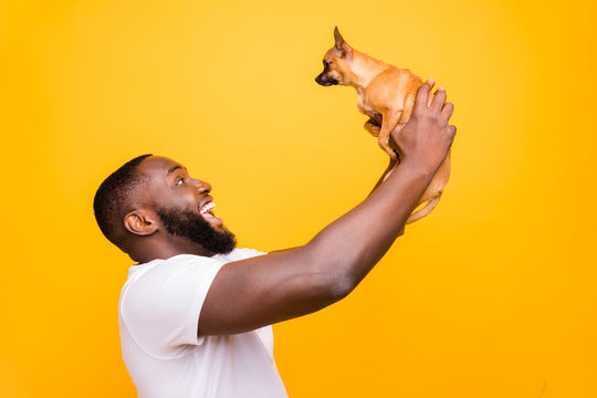 Profile photo of dark skin guy talking to lovely little pet wear casual outfit isolated yellow background