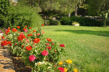Fotobehang Olijf Summer exotic beautiful Cyprus Garden
