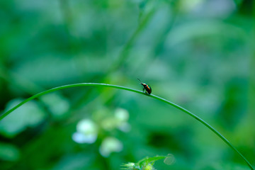 bug sitting on a grass