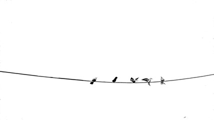 Digital drawing of birds on electrical wire, black and white image, birds on white background