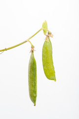 Peapods on White