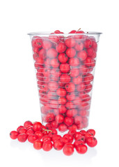 Rowan berries in plastic cup on white background