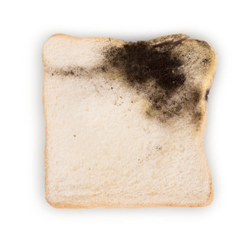Mildew on a slice of bread. Stale bread on white background