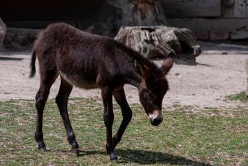 Photo sur Plexiglas Ane Donkey zamora