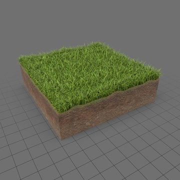 Grass cross section 3