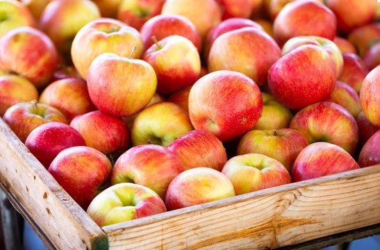 Honey crisp apples at a local outdoor market