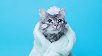 Funny wet gray tabby cute kitten after bath wrapped in green towel with big eyes. Just washed lovely fluffy cat with soap foam on his head on blue background. Fototapete