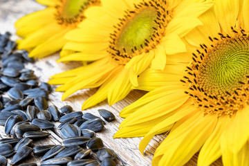 Sunflower seeds near the flower of a sunflower on a wooden background. Fototapete