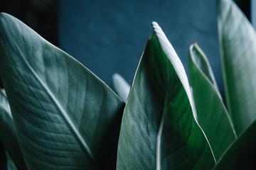Dark green palm leaves against gray wall. Minimalism interior concept - fototapety na wymiar