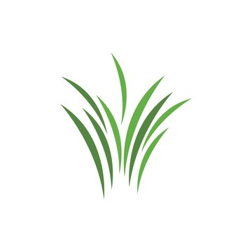 Grass ilustration logo vector