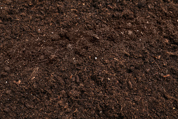 Fresh soil for gardening as background, closeup Wall mural