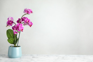 Tuinposter Orchidee Beautiful tropical orchid flower in pot on marble table against light background. Space for text