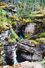 Foto auf Leinwand Forest river Athabasca falls in the Canadian rockies