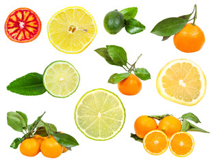 set of various fresh citruses isolated on white