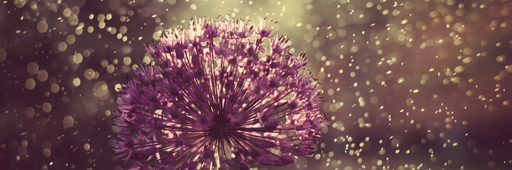 Photo sur Plexiglas Nénuphars Abstract flower macro photo with drops. Artistic Background for desktop. Magic Floral Art banner. Creative Wallpaper.