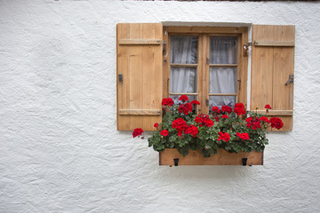 Red geraniums on wooden window