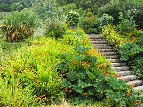 Stone steps covered in moss in Irish garden