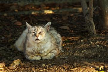 夕陽の匂いを嗅ぐ猫