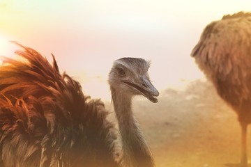 In de dag Struisvogel portrait of ostrich