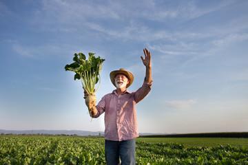 Farmer with sugar beet in field