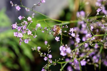 Insekt an zarter Lavendelblüte